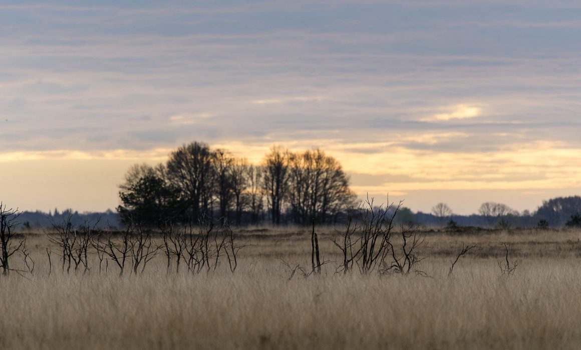 Dwingelderveld Drenthe 2017
