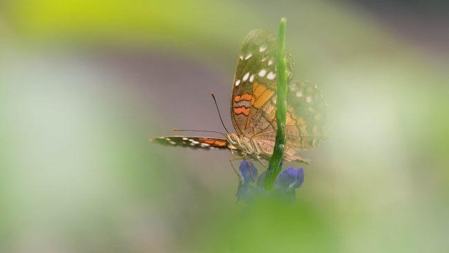 Papiliorama Drenthe 2017