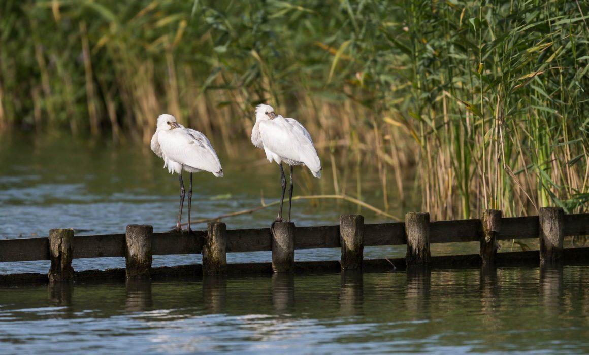 Waterrijk Park Lingezegen 2017