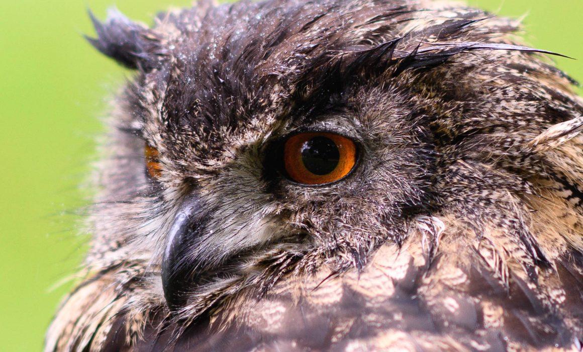 Roofvogels valkenier NCN jubileum 2017