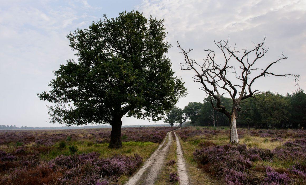 Deelerwoud Veluwe Arnhem 2018