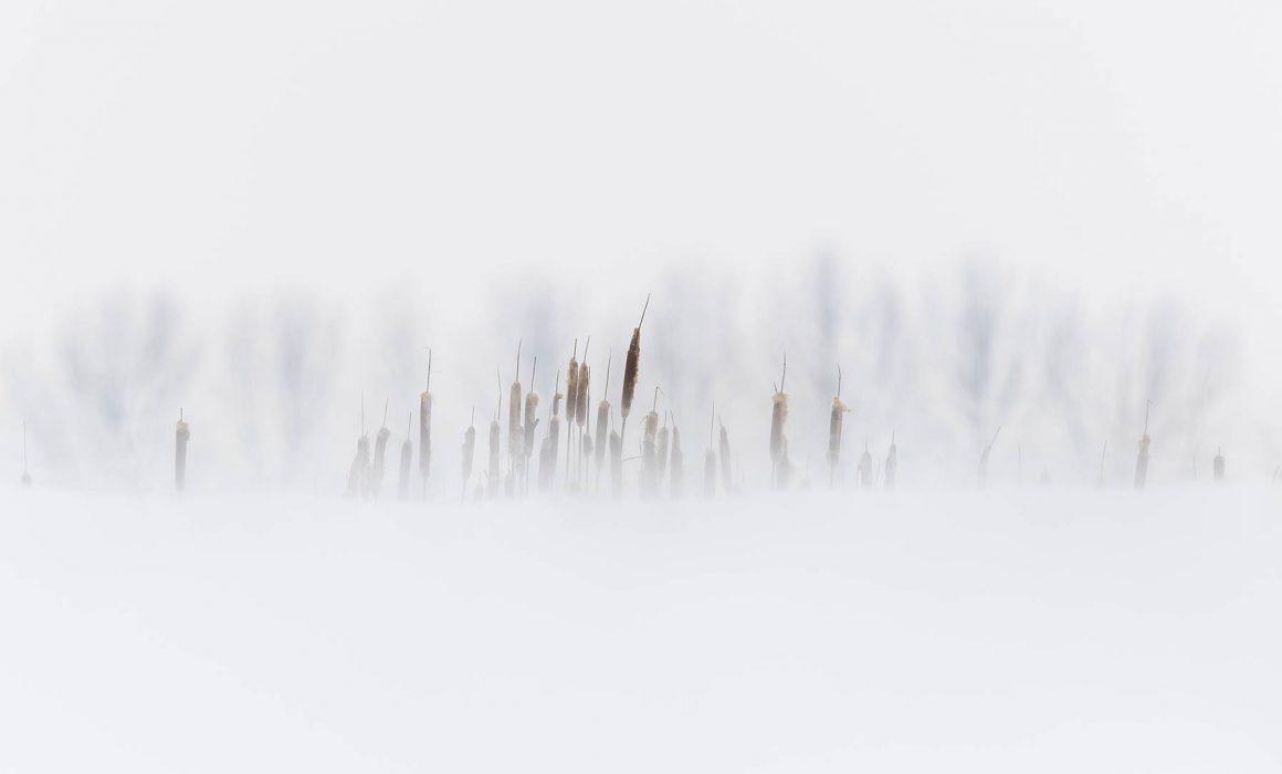 Park Lingezegen januari 2019