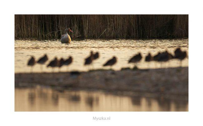 Waterrijk Park Lingezegen maart 2019