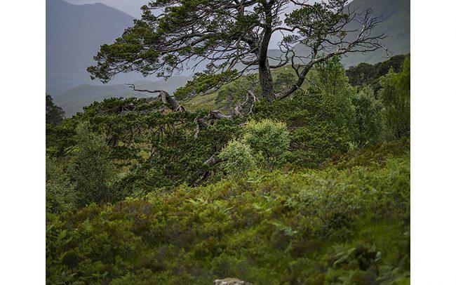 Schotland, Glen Affric, juli 2019